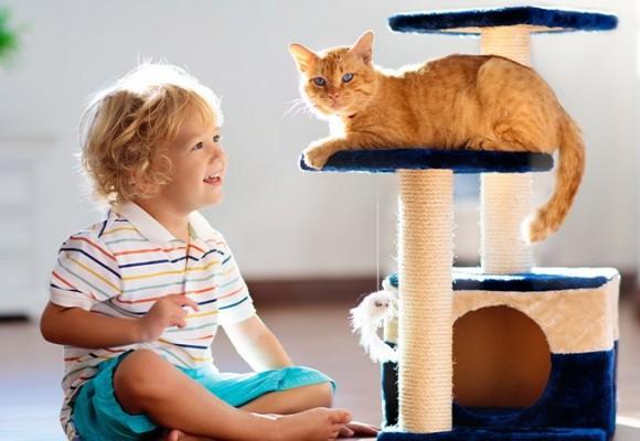 Detii un catel sau o pisica? Iata ce trebuie sa stii